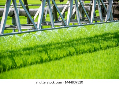 Watering machine Rice Field Green agriculture ecosystem Asian rice paddy field Vietnam green farm. Harvest agriculture planting cultivation golden green rice terraces in organic farm