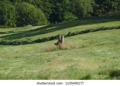 Watering place for cows with shadows of the surrounding trees