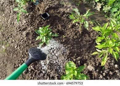 watering plants in a garden
