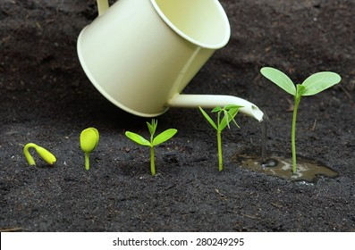 Watering plants growing in sequence of seed germination on soil, evolution concept