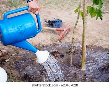 Watering the trees.