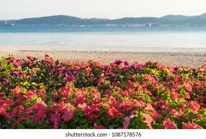 Waterline with the flowers in front in Zadar, Croatia