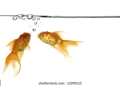 Waterline with small air bubbles and gold fish