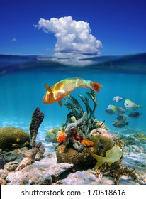 Waterline with underwater colorful tropical marine life and above surface blue sky with a cloud, Caribbean sea