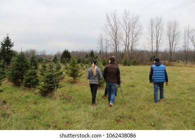 Waterloo, NY/USA-11/27/17: A family goes in search of the perfect Christmas tree at a tree farm.