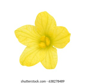 watermelon flower isolated on white background