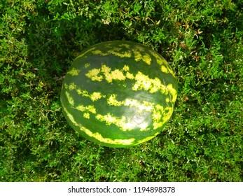 Watermelon on grass background