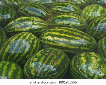 Watermelons and melons lie in the water fountain