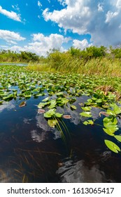 Waters of Everglades national park wetlands, Florida, United States of America