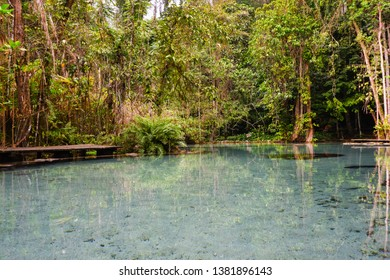Watershed Forest at Ban Nam Rat in Surat thani Thailand, Tropical forest