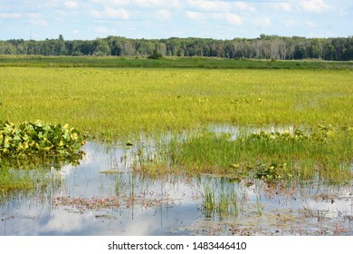 Watershed is a land area that channels rainfall and snowmelt to creeks, streams, and rivers, and eventually to outflow points such as reservoirs, bays, and the ocean.