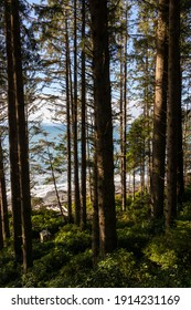 waterview through the trees at Juan de Fuca Park on Vancouver Island, British Columbia