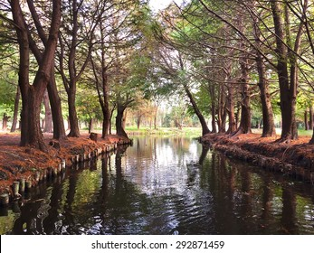 Waterway and trees in the fall