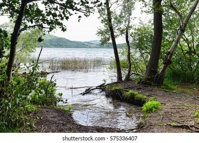 waves and driftwood on Laach Lake at eifel region. old caldera of volcano (Rhineland-Palatinate, Germany)