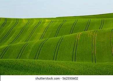 Waves in the fields in Moravia region