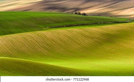 Waves of green fields in southern Moravia. Czech Republic