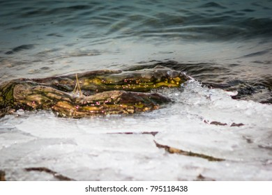 Waves on the river bank. The icy root of the tree in the water.