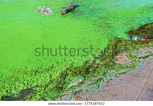 waves-thrown-ashore-algae-abundantly-600