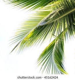 Waving palm tree leaves