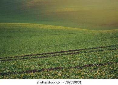 Wavy field in the hills