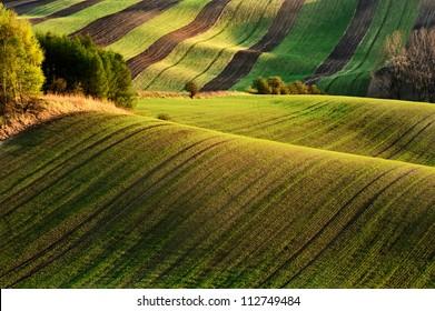 Wavy green fields, Moravia, Czech Republic