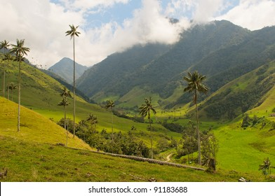 Wax palm trees of Cocora Valley, Colombia