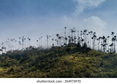 Wax palms in Cocora valley, Colombia