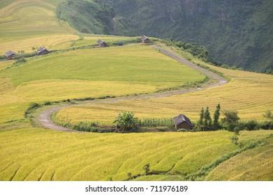 The way across rice field