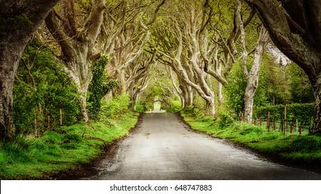 the way ,Dark Hedges, Co Antrim