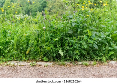 Way with different wild plants