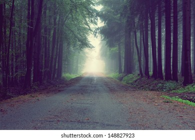 way in the fog