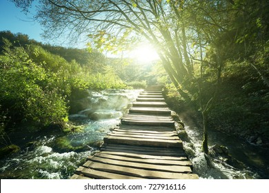 chemin en forêt, lacs de Plitvice, Croatie