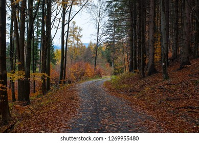 Way in forrest during fall
