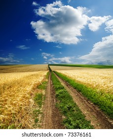 way in golden agricultural field under clouds
