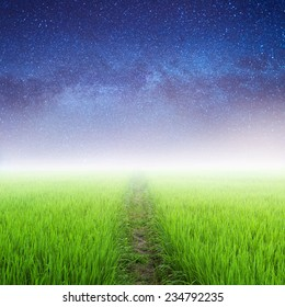Way in Green rice fields and Star night