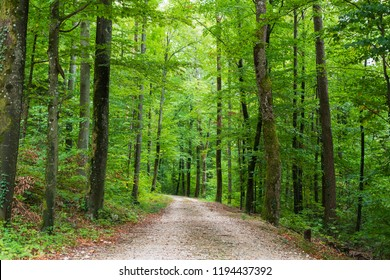 Way into green forest