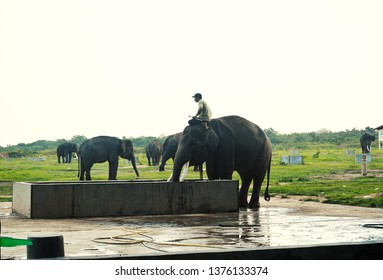 Way kambas, Lampung/Indonesia. November 23, 2017: Elephant Handler and Elephans in Way Kambas National Park, Lampung, Indonesia.