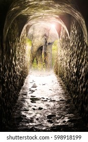 Way to the Mole-Nationalpark with a forest elephant in the door.