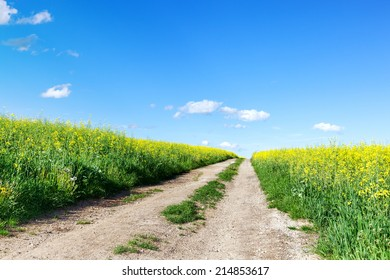 Way of nature in spring