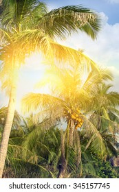 Way on sand beach under palm trees at tropical coast of Thailand, film stylized for create atmosphere