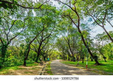 The way in the park with tree for exercise and relax