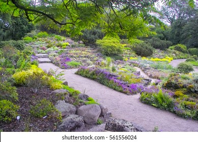 A way passes thrugh a colorful apine rockery garden, with alpine flowers, plants, succulents and rocks