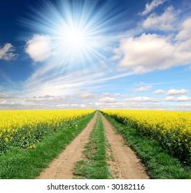 Way in rapeseed field