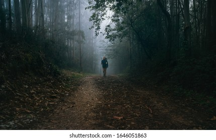 Way of Saint James in Nothern Spain. Pilgrim backpacker female going by the path through Eucalyptus forest back view image shoot. Holy places pilgrimage concept image.