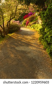 Way with shades in the well-tended garden with color flowers