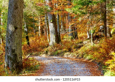 The way through autumn primeval forest in lower austria