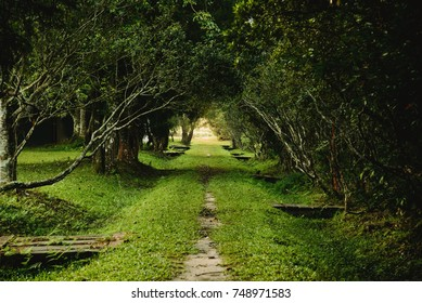 The way and tree tunnel with green grass.Landscape forest.