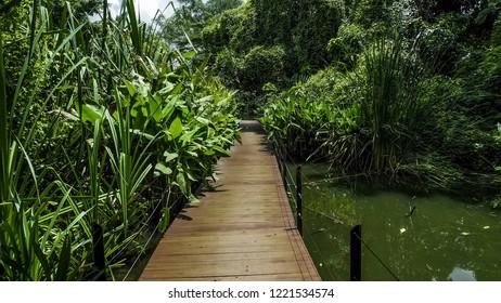 way, walkway, bridge walk, wooden bridge walkway