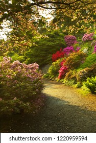 Way in the well-tended garden with color flowers