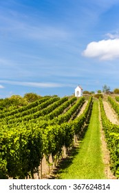 wayside near Hnanice with vineyard, Southern Moravia, Czech Republic